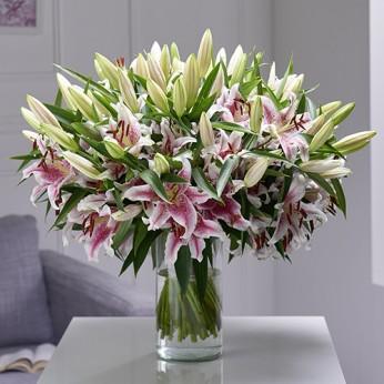 Bouquet de 50 lys Stargazer