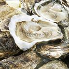 Huîtres ouvertes Marennes n°4